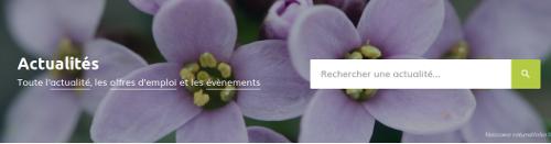 Actualités du réseau Tela Botanica