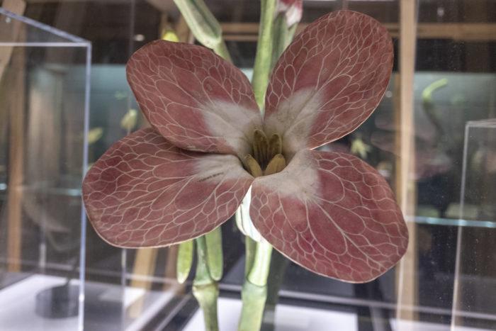 Exposition Belles plantes
