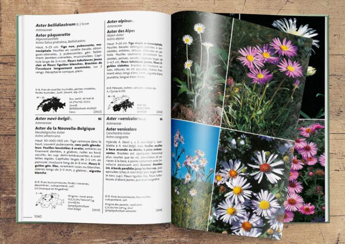 Flora Helvetica 5e édition dans sa version papier
