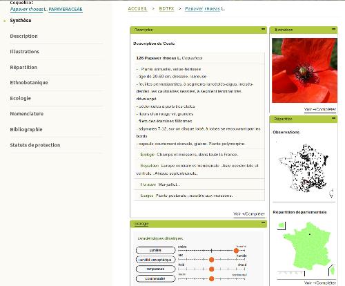 Fiche eFlore du Coquelicot (Papaver rhoeas L.) sur le site internet de Tela Botanica - CC BY-SA Tela Botanica