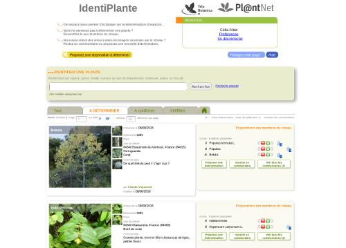 Page IdentiPlante, sur le site Internet de Tela Botanica - CC BY-SA Tela Botanica