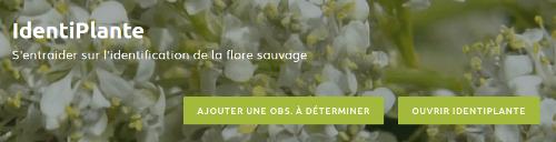 Page Outils de IdentiPlante sur le site Internet de Tela Botanica - CC BY-SA Tela Botanica