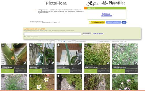 Page PictoFlora, sur le site Internet de Tela Botanica - CC BY-SA Tela Botanica