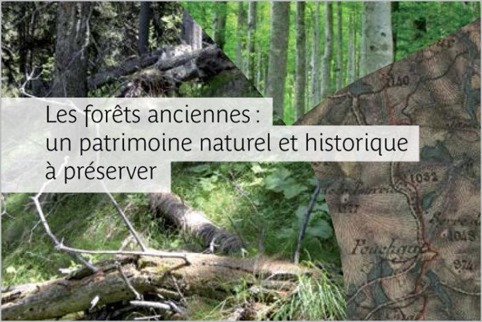 Les forêts anciennes