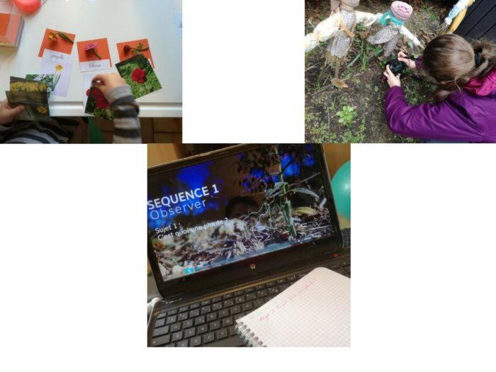 Utilisation du MOOC Botanique dans la découverte du monde botanique - montessorimaispasque.com