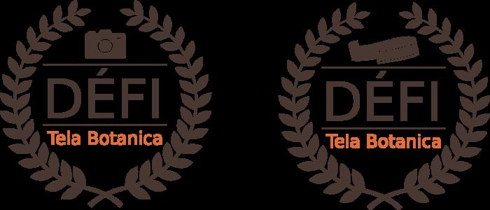 Logos du Défi Photo et du Défi Vidéo