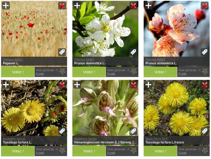 aperçu des photos du défi floraison ODS