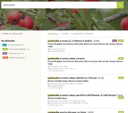"Page Flore pour la recherche ""Lysimachia"" du site Internet de Tela Botanica - CC BY-SA Tela Botanica"