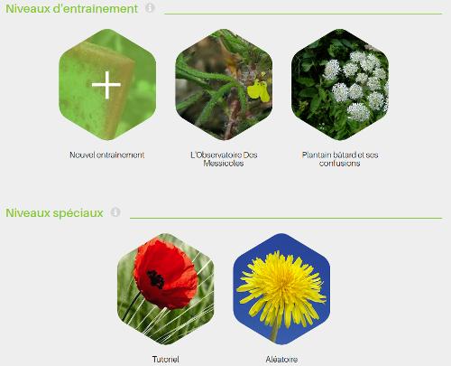 Choix des entraînements The Plant Game - CC BY-SA Tela Botanica