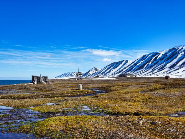 Des plantes de plus en grandes colonisent l'Arctique, signe du réchauffement climatique © Getty / Patricia Hamilton