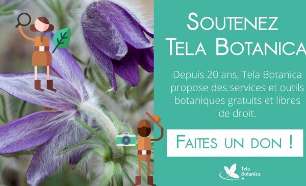 Soutenez Tela Botanica : faites un don !