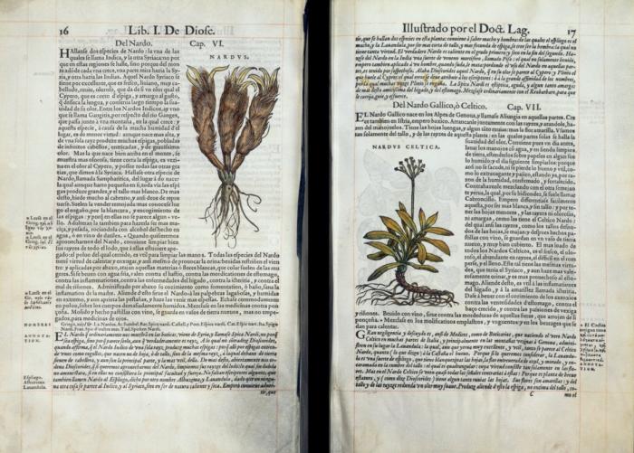 « De Materia Medica » de Dioscoride