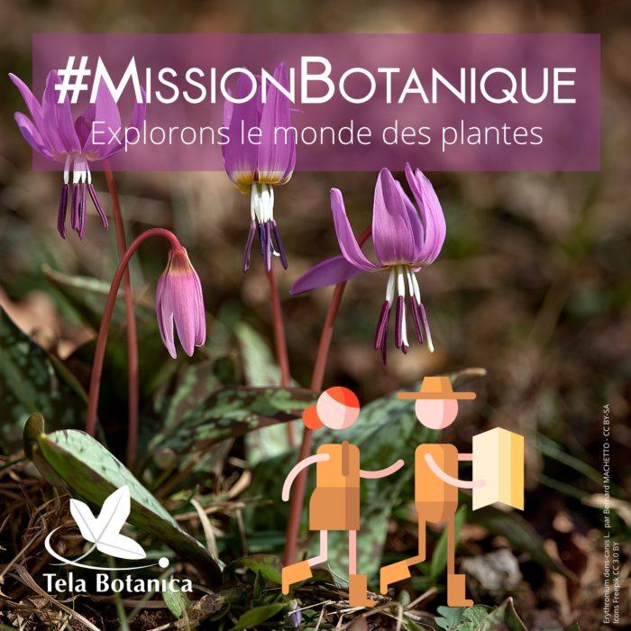 Mission botanique rose