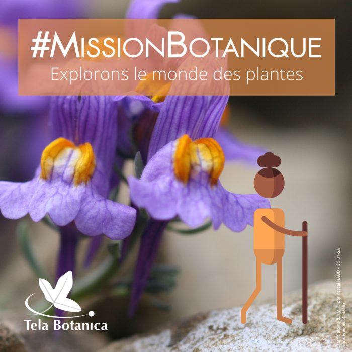 Mission botanique orange