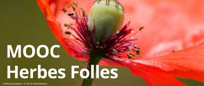MOOC Herbes Folles