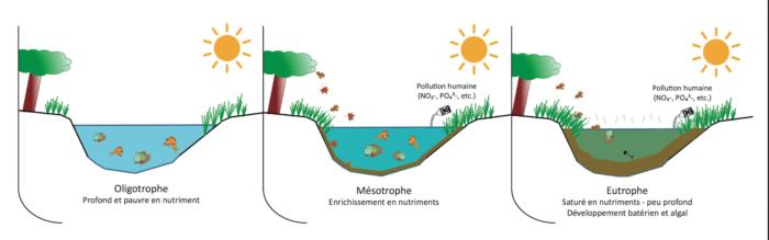 eutrophisation des milieux aquatiques