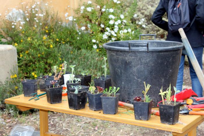 Image AF B.A.-ba-du-jardinage-domaine-du-rayol-Chloé-Arregoces