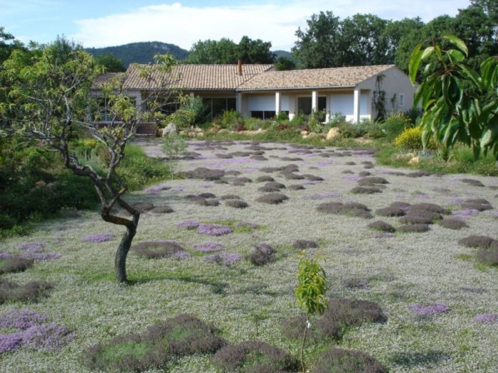 Image AF Graminées couvre sols et gazons alternatfis