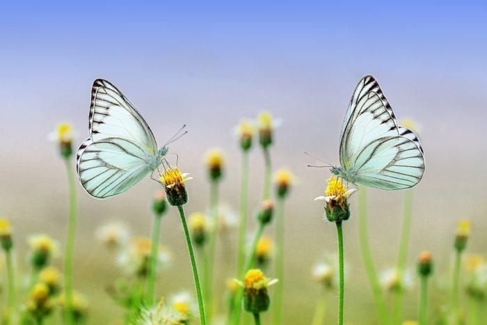 butterfly-1127666_960_720
