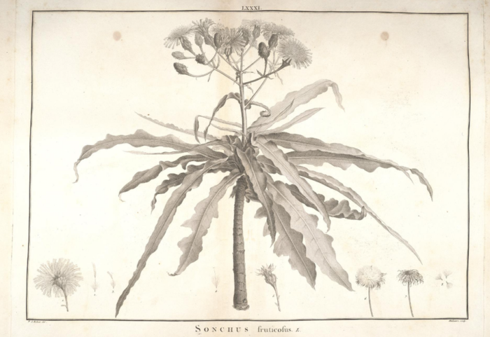 Planche extraite du « Stirpes novae ». Biodiversity Heritage Library