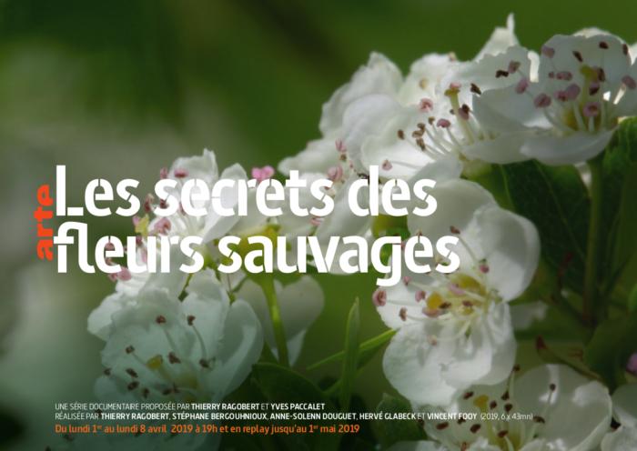 Le secret des fleurs sauvages