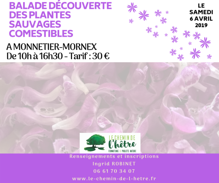 Plantes comestibles 6.04.2019