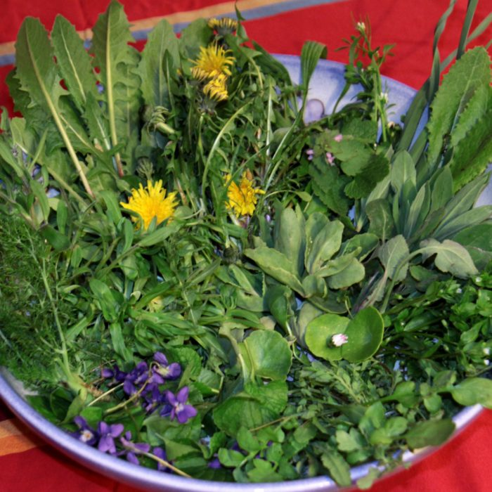 asiettes plantes sauvages