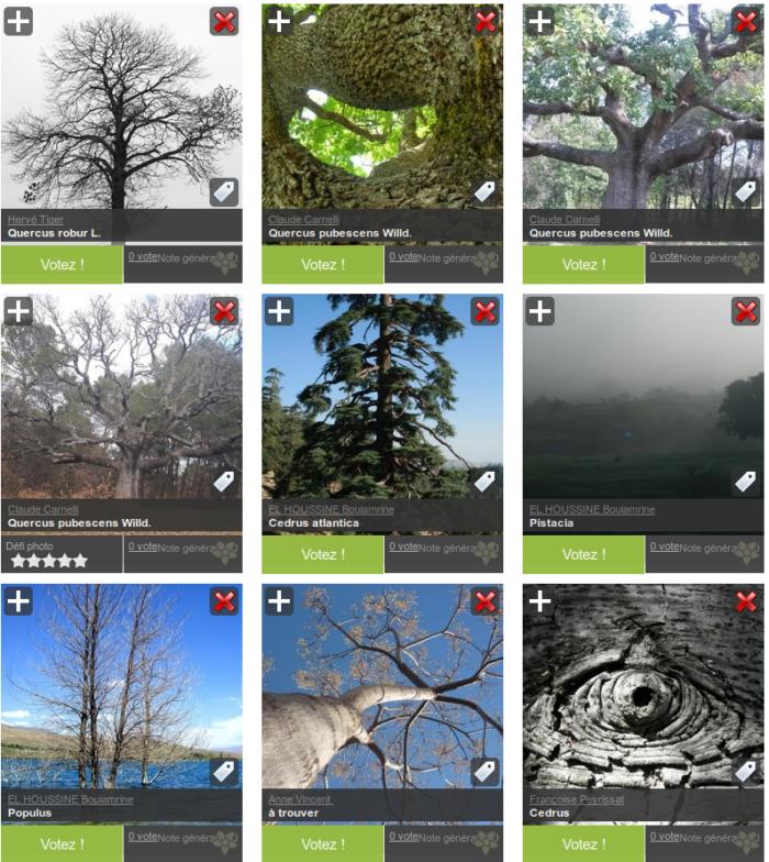 Defi photo arbre