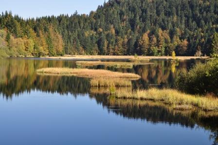 Lac tourbière de Lispach (88)