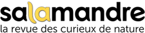 logotype Salamandre