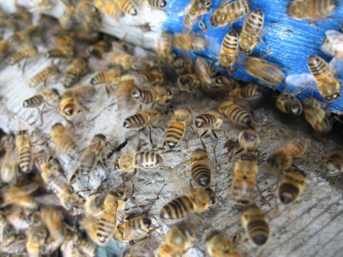 Lunivers-fascinant-des-abeilles