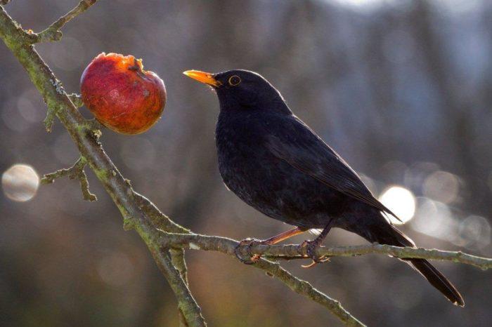 Ornithologie-domaine-du-rayol