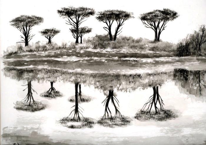 Pinus pinea L. par Michel DÉmares