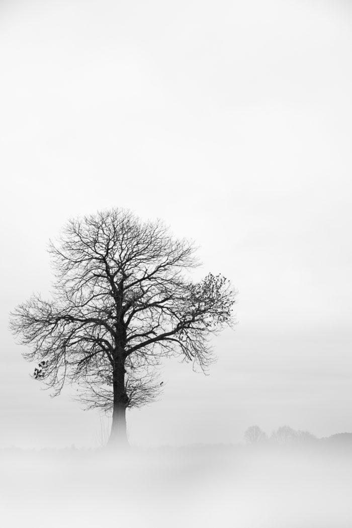 Quercus robur L. par Hervé Tiger