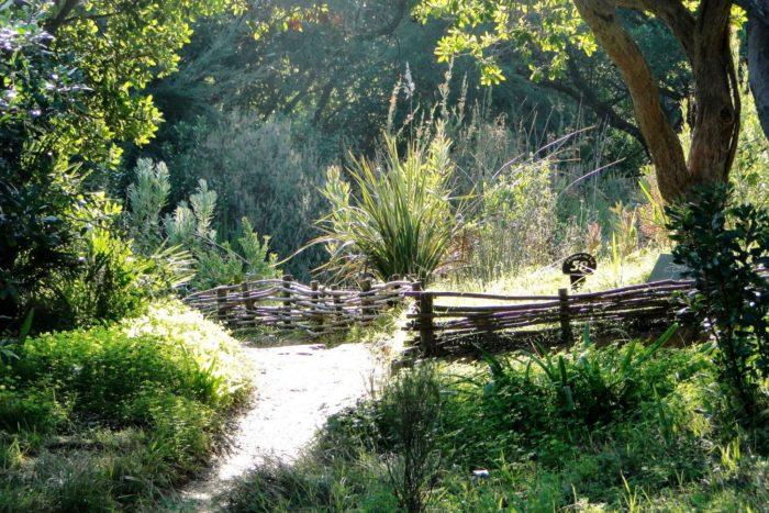 Tressage-au-jardin-e1511343943851