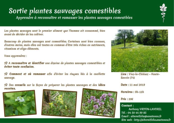2019-05-11 plante-sauvages-comestibles