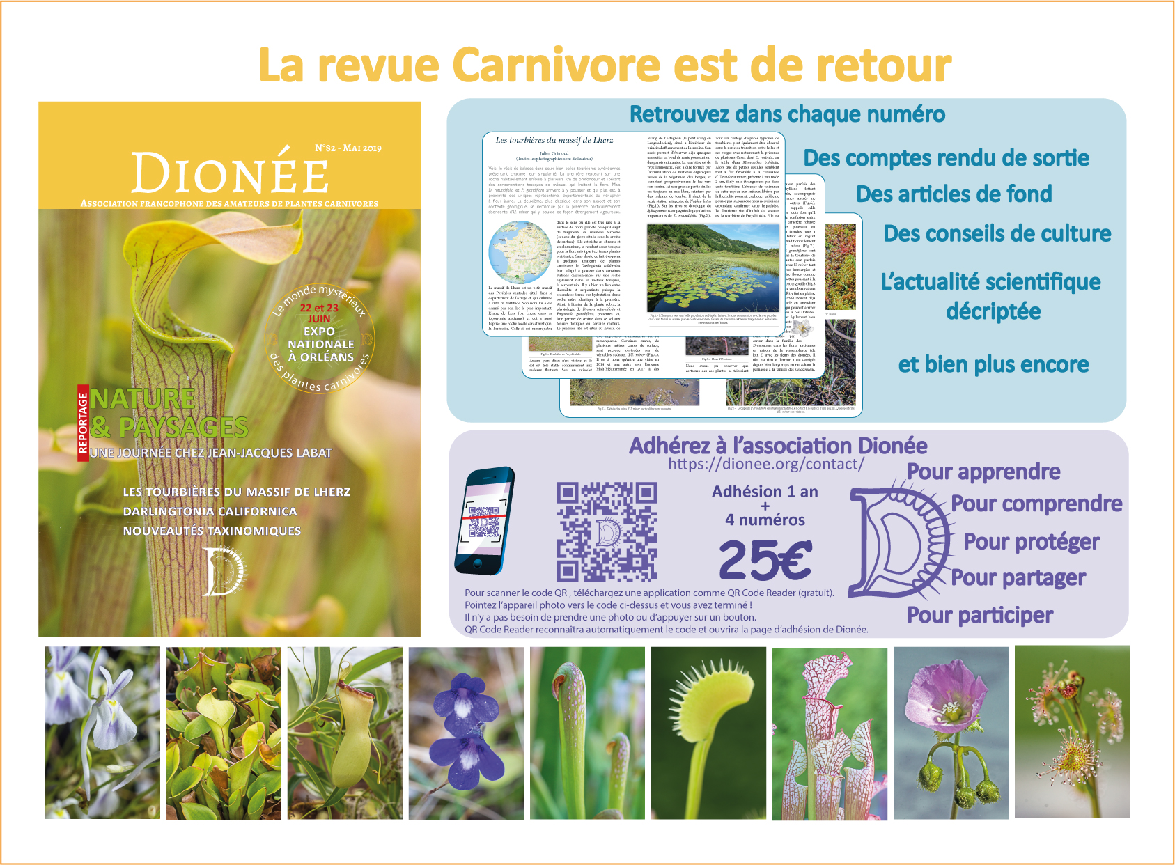 Plaquette revue Dionee2