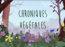 chroniques végétales