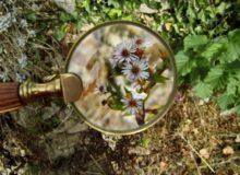 loupe botaniste