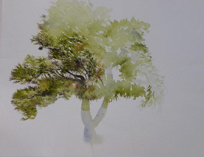22 - Le pin de ma rue par Cathy Pupin