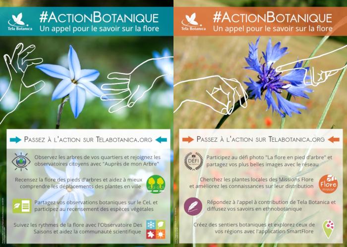 ActionBotanique2019-Visuel-Présentation-2pages