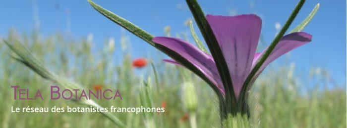 photographie de plante