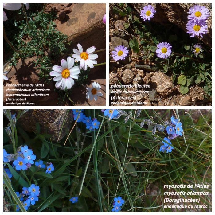 Photographies de fleurs