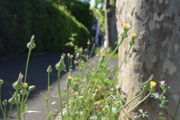 streets-petit