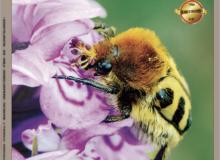 Couverture de l'Orchidophile 221 - juin 2019