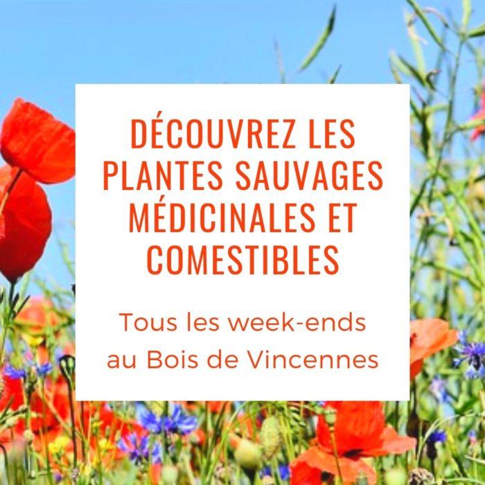 Découvrez avec Isabelle Desfleurs les plantes sauvages médicinales et comestibles du Bois de Vincennes