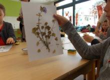 Atelier création d'herbier