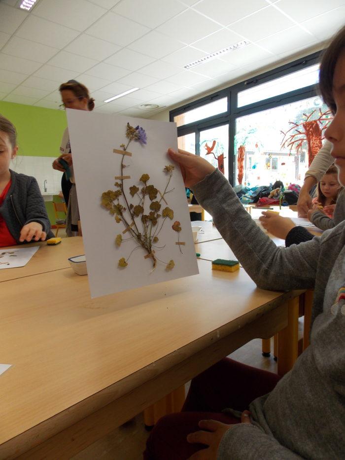 Exemple de planche d'herbier, réalisé par un enfant