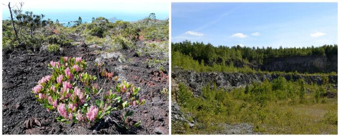 Maquis minier en Nouvelle Calédonie par JM Lbigre et mine de Montréal- Brougthon par Andréanne Boucher (CC BY-SA)