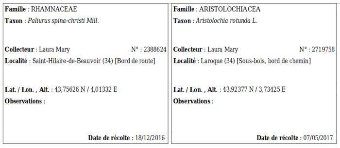 Exemple d'étiquettes d'herbier générées par le CEL